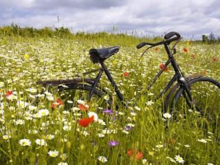 Собирать пазл velosiped v pole онлайн