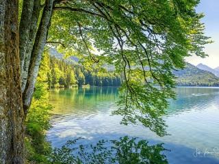 Собирать пазл Branches over water онлайн