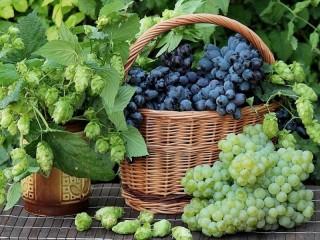 Собирать пазл Grape and hop онлайн