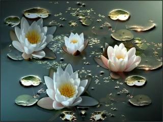 Собирать пазл water lilies онлайн