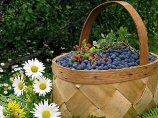 Собирать пазл Berries and flowers онлайн