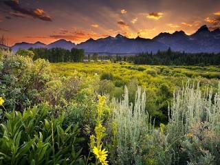 Собирать пазл Green nature онлайн