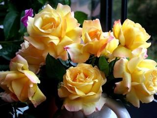 Собирать пазл Yellow roses онлайн