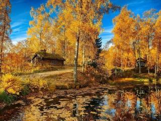 Собирать пазл Golden autumn 2 онлайн